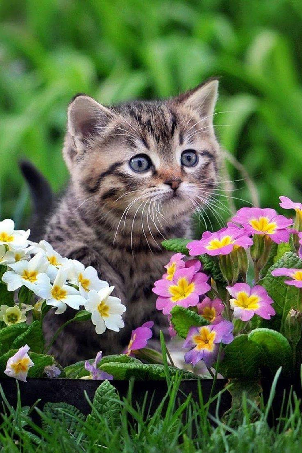 MAGGIE E. Google+ Cats Cute cats, dogs, Cute cats