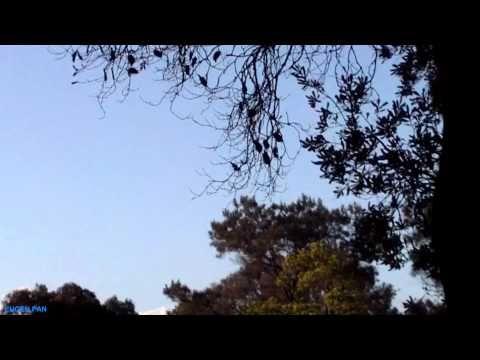 Adrian Paunescu-Telefon peste moarte. http://www.memoris.ro/blog/telefon-peste-moarte/