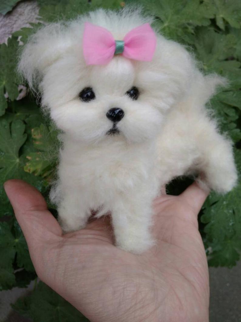Ooak Needle Felted Maltese Puppy Dog Etsy Maltese Puppy Puppy Cartoon Little Dogs