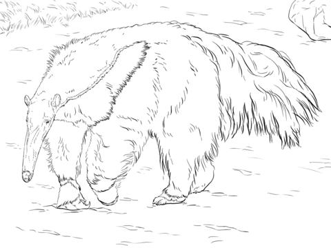 Oso Hormiguero Gigante Dibujo para colorear | animales en 2018 ...