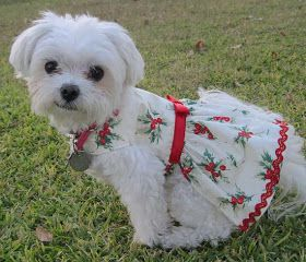 Haute Whimsy: Gift Guide: Pet Parents