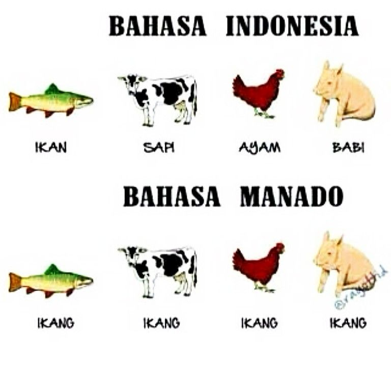 Bahasa Manado Gambar Lucu Lucu Cerita Lucu