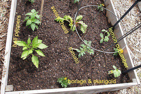 Raised tomato beds Garden Spot Pinterest