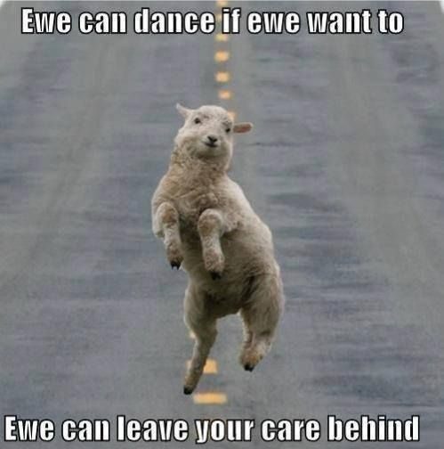 Cause Your Lambs Don T Dance And If They Don T Dance Well They