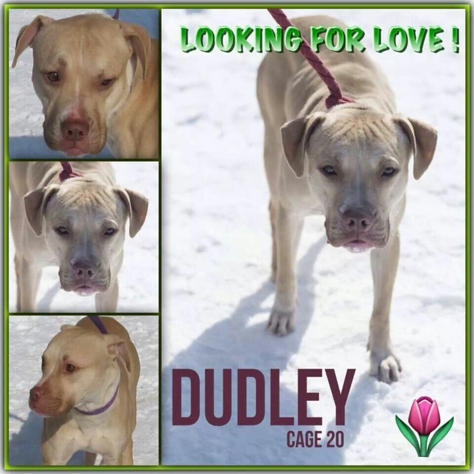 Canton ohio dudley needs a home and love (With images