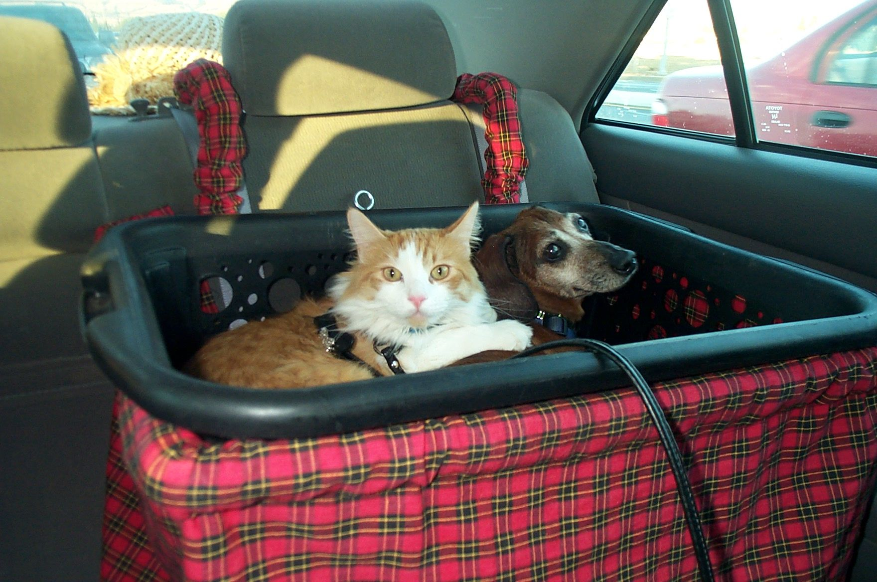 this is taz the cat and zack traveling with us in thier zoe dog car seat cats hate the car but. Black Bedroom Furniture Sets. Home Design Ideas