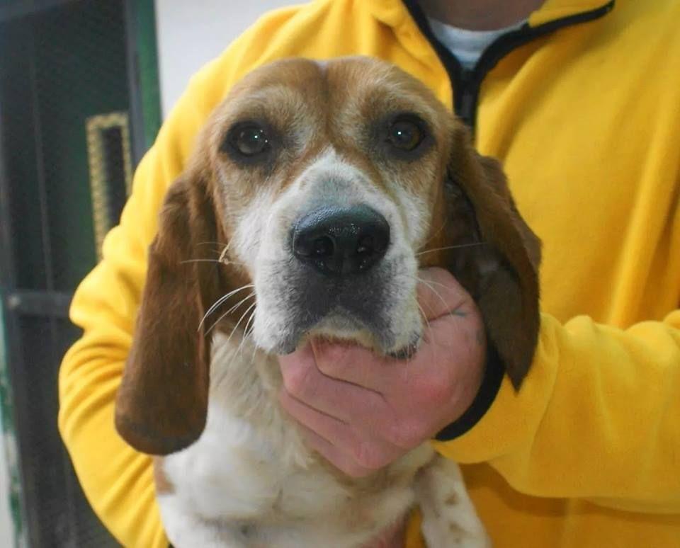 Meade County Animal Shelter 516 Hillcrest Dr Brandenburg Ky 270