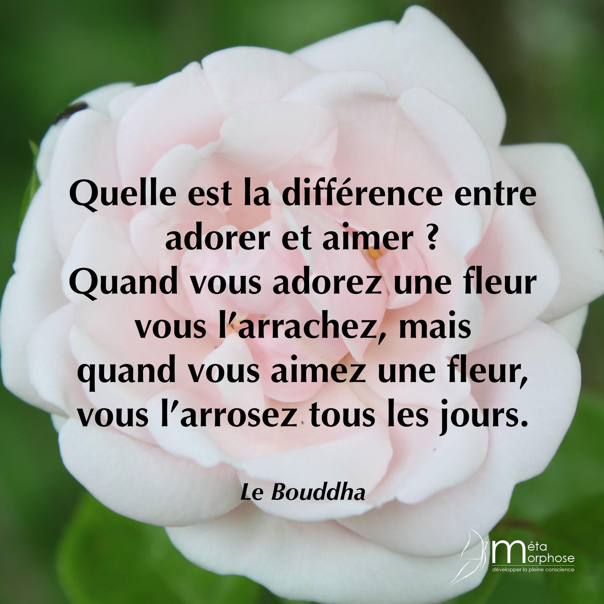 Différence entre adorer et aimer. #08h08 #JeSuisPrésentAMaVie ...