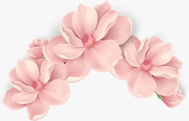 Vector Hand Painted Pink Flowers Vector Hand Painted Blooming Flowers Png Transparent Clipart Image And Psd File For Free Download Flower Painting Flower Illustration Flower Art