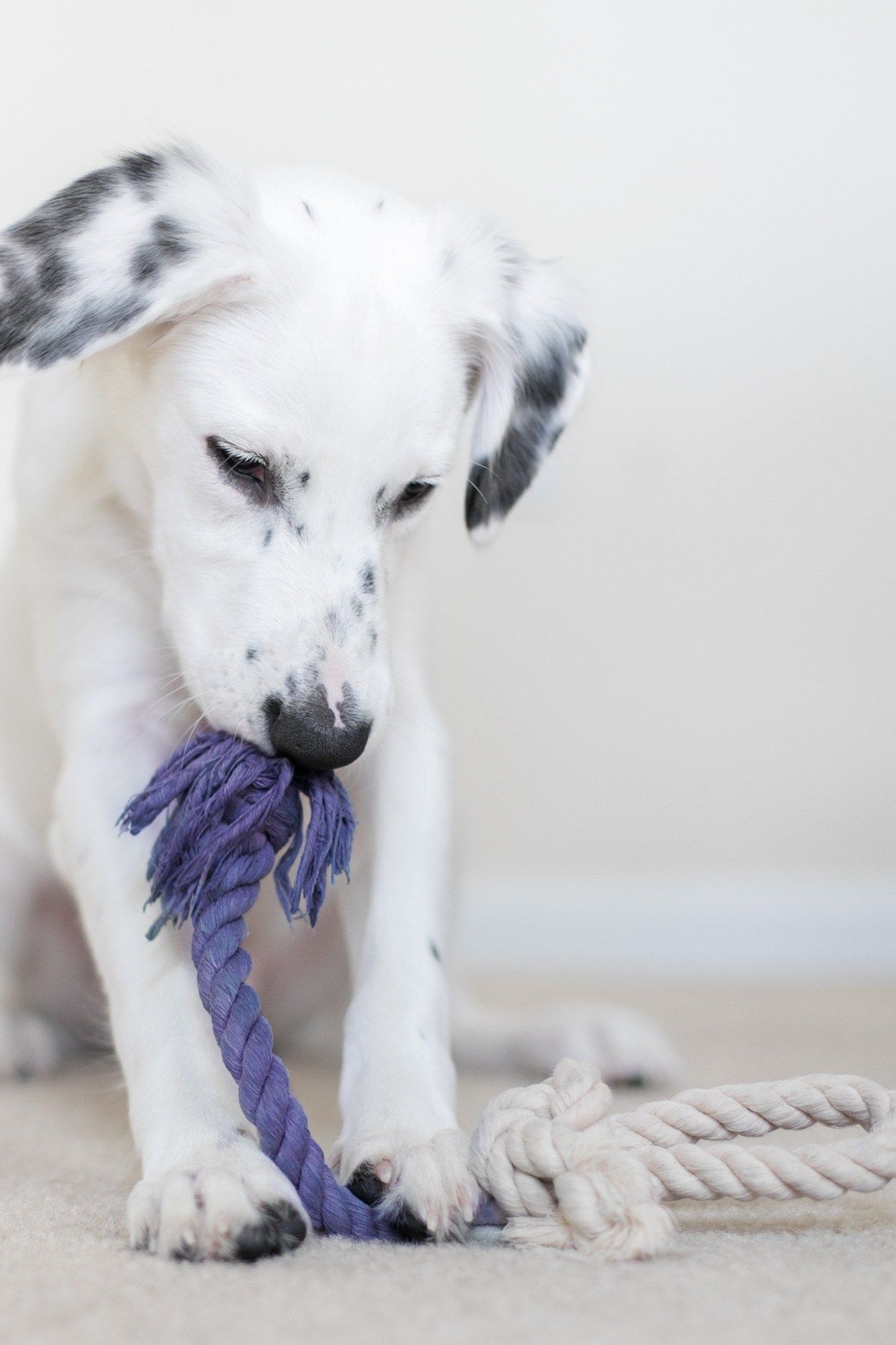 Diy All Natural Rope Toy For Your Precious Pup Dog Toys Modern