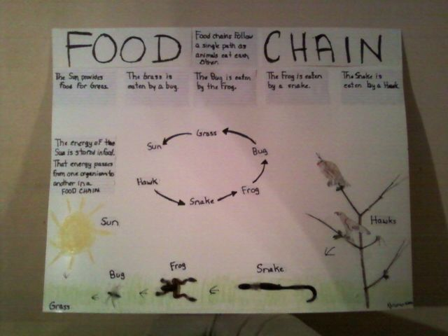 Food chain lessons 5th grade
