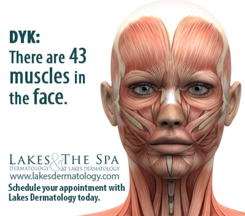 How many muscles are in the face? There are 43 muscles in the face ...