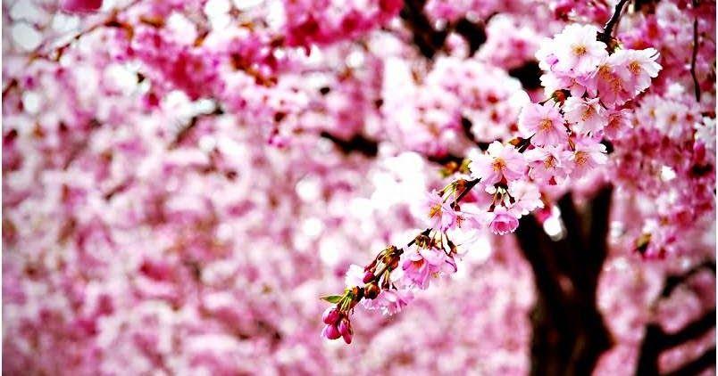 Kumpulan Wallpaper Bunga Cantik Bunga Itu Melambangkan Keindahan Setuju Gak Kumpulan Wallpaper Berkualitas Dengan Berbagai K Gambar Bunga Bunga Bunga Cantik