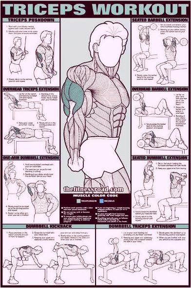 Triceps Workout Chart
