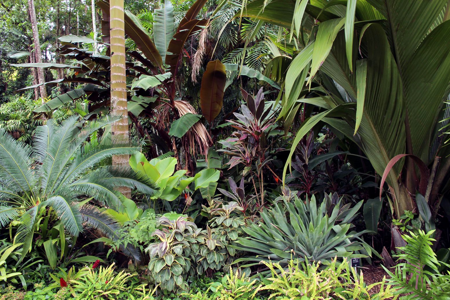 Cycad Heliconia indica Calathea Cordyline Miss Andrea and