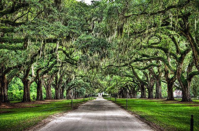 6ac0e9a4d2e85a038f8006e1fc713510 - Boone Hall Plantation & Gardens Charleston Sc