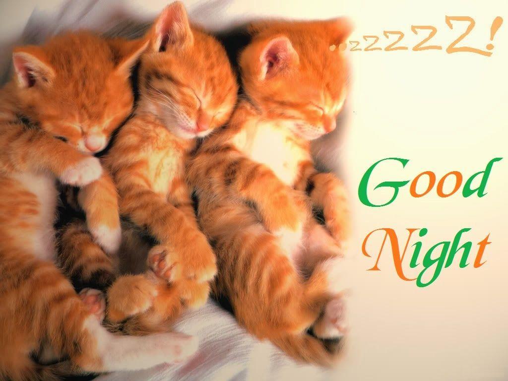 Cats Good Night Hd Wallpaper Coolhdbackground Com Killar Natt Godnatt