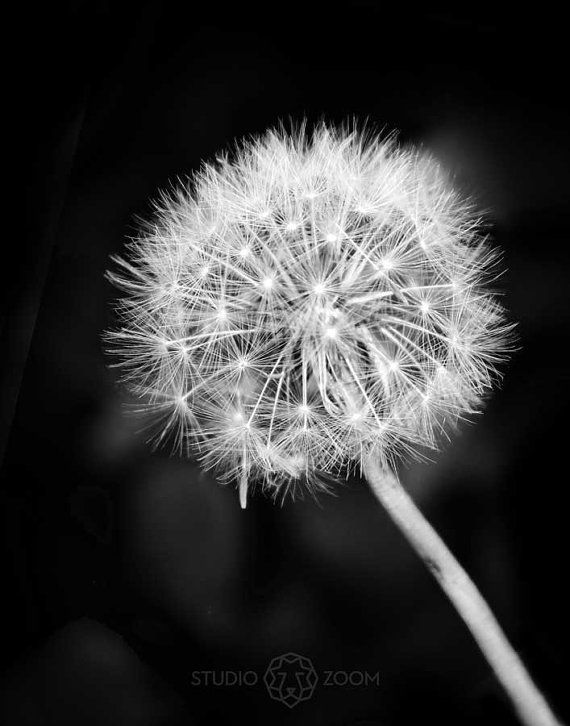 Dandelion Photo Flower Photography Floral Garden and by StudioZoom