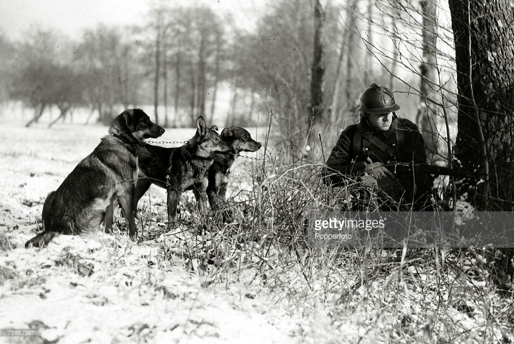 circa 1940, A French soldier from an infantry regiment in the snow clad fields on the western front with three dogs trained to assist the army