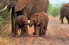Resultado de imagen de elephant babies
