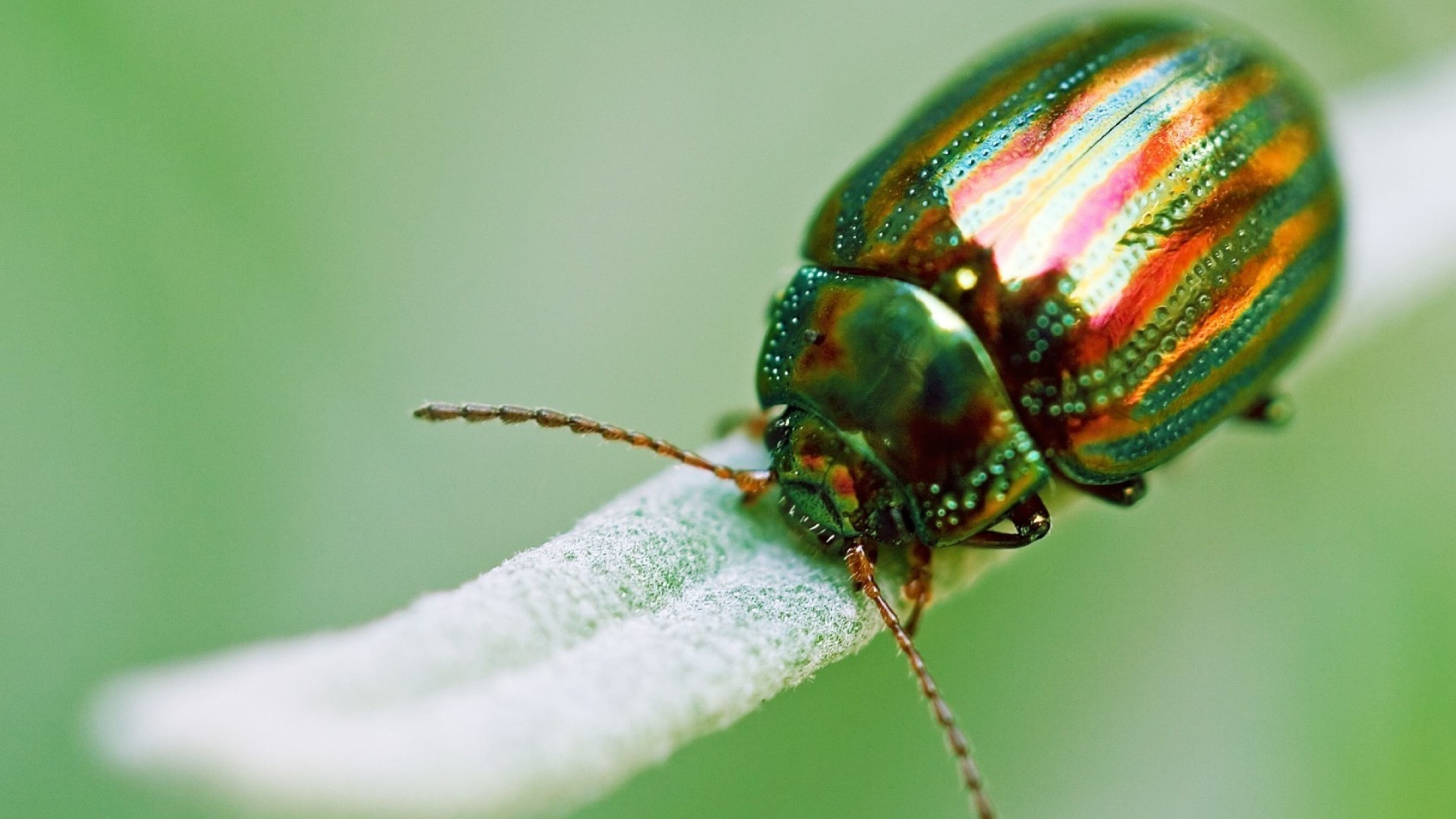 U N Insects MACRO wallpaper | ... ...