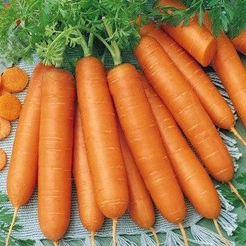 Carrot Seeds For Sale Vegetable Garden Seeds Vegetable Seeds For Sale Carrot Seeds Vegetable Seed