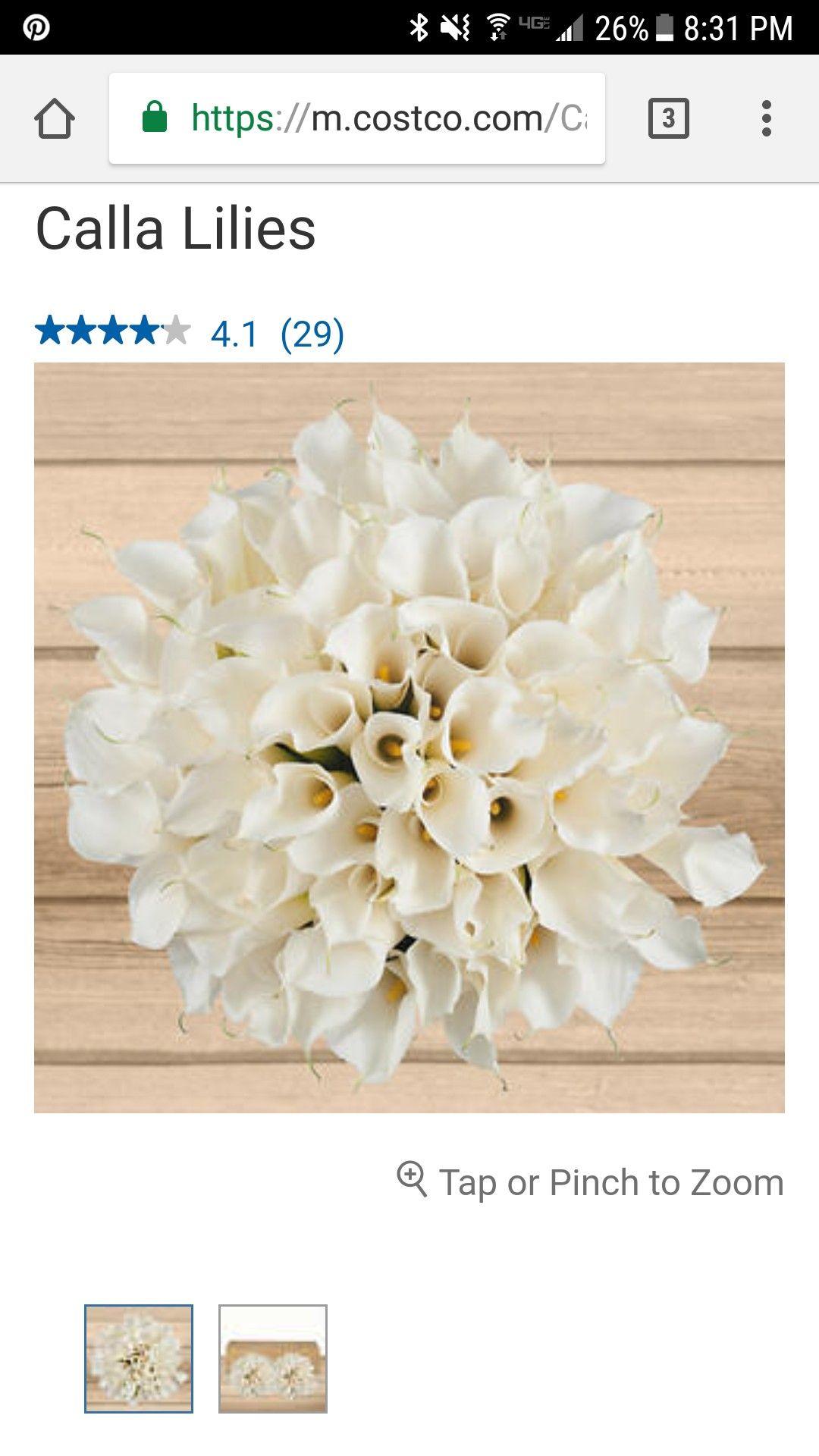 Costco bulk flowers haven celebration pinterest celebrations costco bulk flowers izmirmasajfo Images