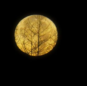 My World in Pennsylvania and Beyond: Super Moon 2016