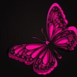 Sweet Potato Souffle Recipe Hot Pink Butterfly Butterfly Wallpaper Pink Butterfly