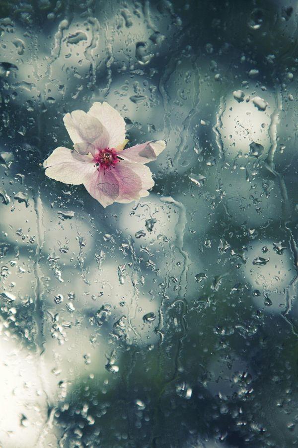 """Résultat de recherche d'images pour """"pluie image pinterest"""""""
