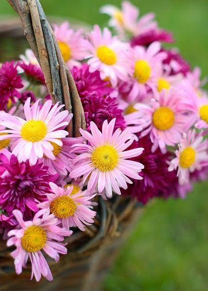 pretty flower basket... Sun 16th Nov 2014