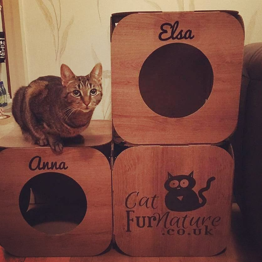 Awwww!  what a cutie!  yay! We're so pleased they like them  thank you so much!   #cat #catsofinstagram #cats_of_instagram #catfurnature #catfurniture #catsinboxes #cattoy #INSTACAT_MEOWS #cutecat #PurrMachine #catsinboxes #catbox #Excellent_Cats #BestMeow #dailykittymail #thecatniptimes #catcube #catpod #ArchNemesis #FlyingArchNemesis #myindoorpaws #ififitsisits #cutecatcrew #catchalet #catnip #themeowdaily #kitty #catpyramid #miuandmaosfurriends