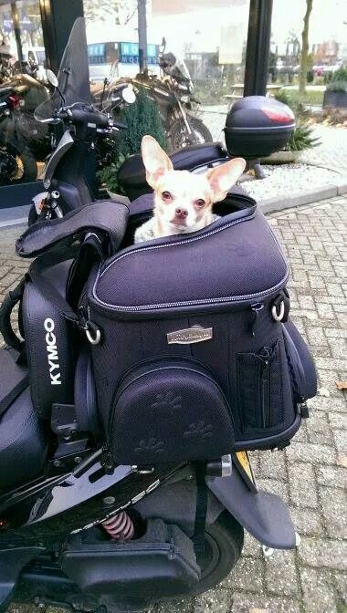 911aeb1518e Dog carrier scooter. | Scooter pet carrier | Dog carrier, Dogs ...