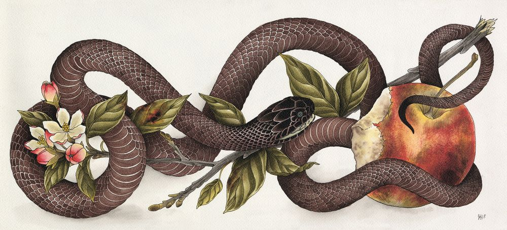Snake and Apple Adam and Eve Garden of Eden   I can be