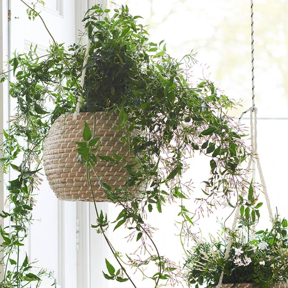 comment entretenir un jasmin elle d coration plantes pinterest jardins plante. Black Bedroom Furniture Sets. Home Design Ideas