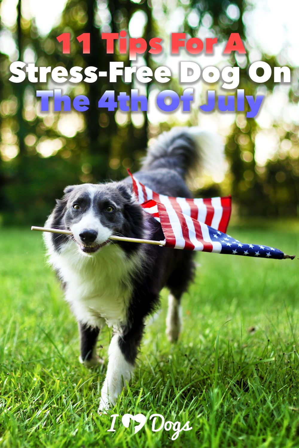11 tips for a stressfree dog on the 4th of july in 2020