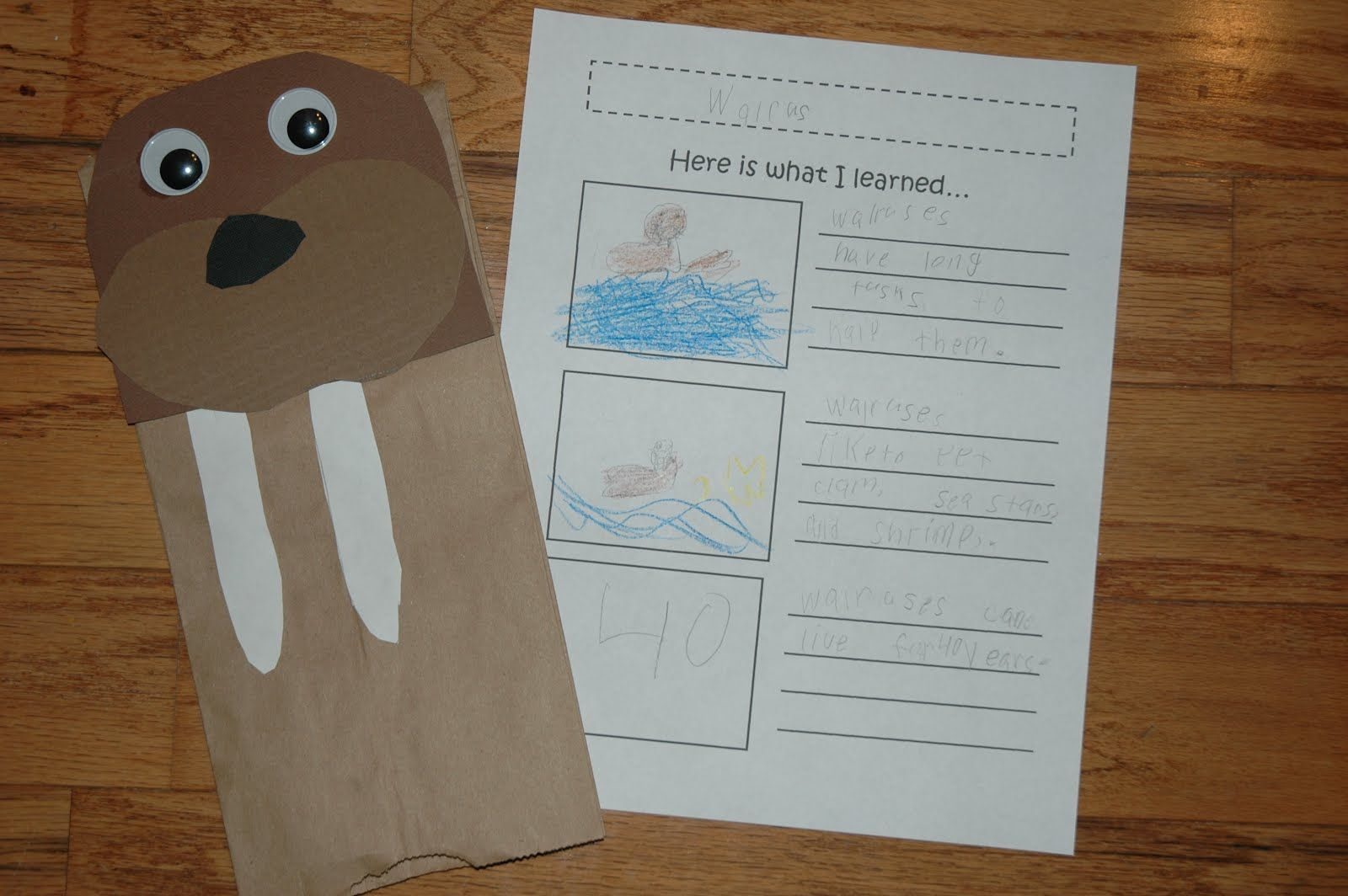 Walrus Crafts For Kids