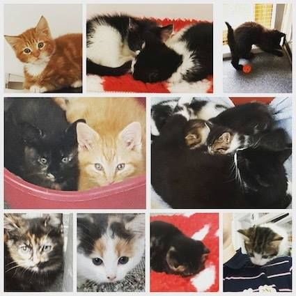 The Scratching Post Cat Rescue Fridayfund Giving Fundraising