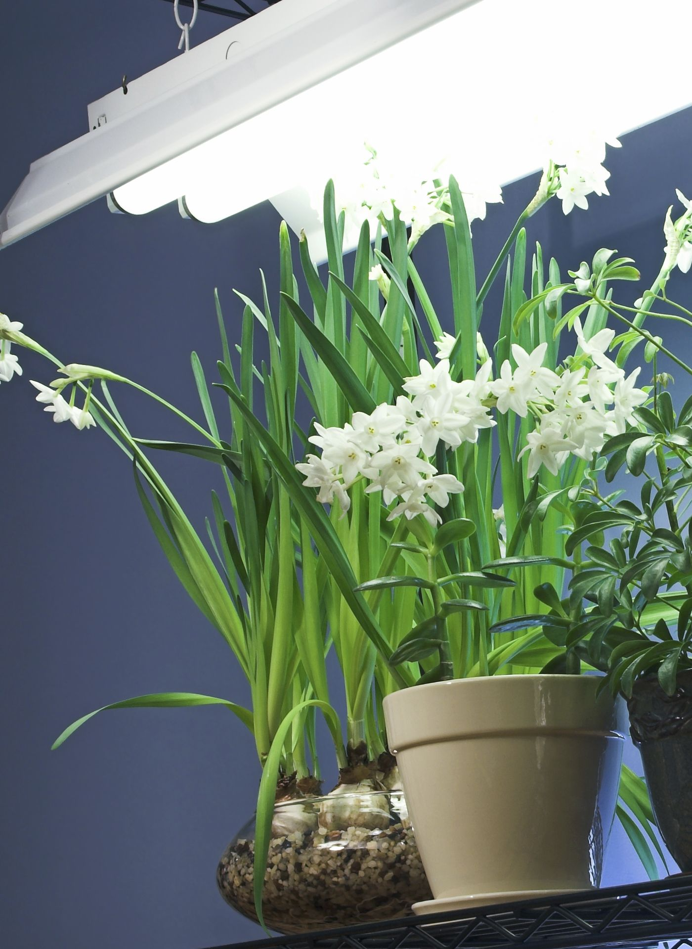 Fluorescent Light And Plants Lighting Options For Indoor