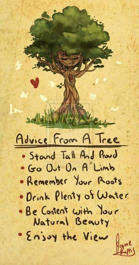 Advice from a Tree Words to live by.   Quotes for kids, Words, Positive quotes