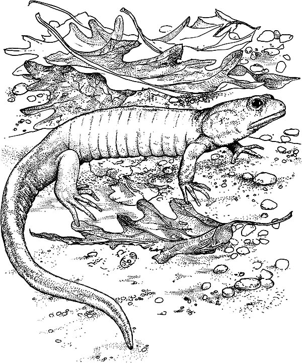 Baby Komodo Dragon Coloring Pages Download Print Online Coloring Pages For Free Color Nimbus In 2020 Dragon Coloring Page Online Coloring Pages Coloring Pages