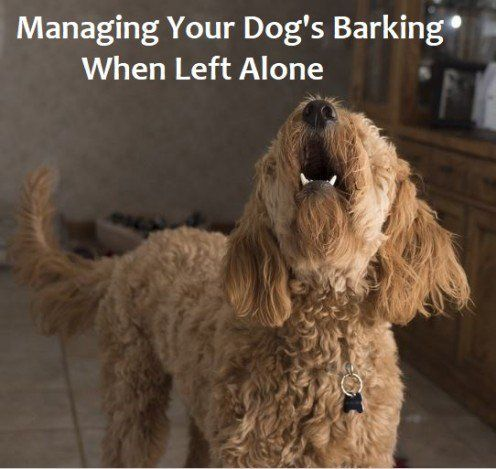How To Deal With Dogs That Bark When Left Alone Dog Training