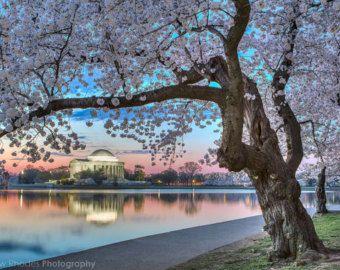 DC Cherry Blossom Photo Washington DC Print by AndrewRhodesPhoto