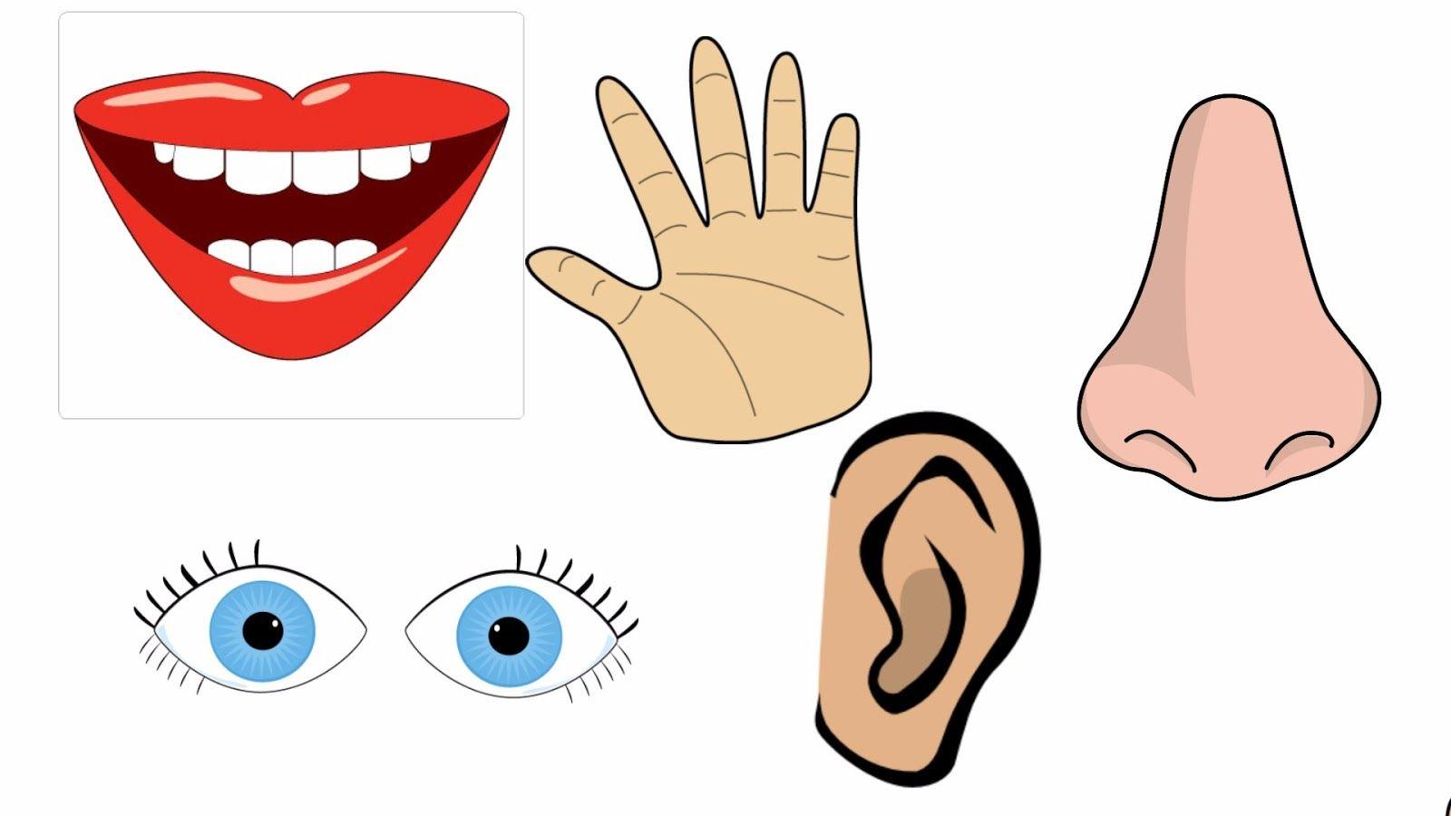 نتيجة بحث الصور عن اعضاء جسم الانسان للاطفال بالعربي Child Rearing Arabic Words Activities