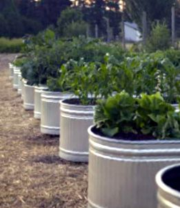 Galvanized Troughs Converted To Sub Irrigation Planters Sips Garden Containers Raised Garden Garden Landscaping