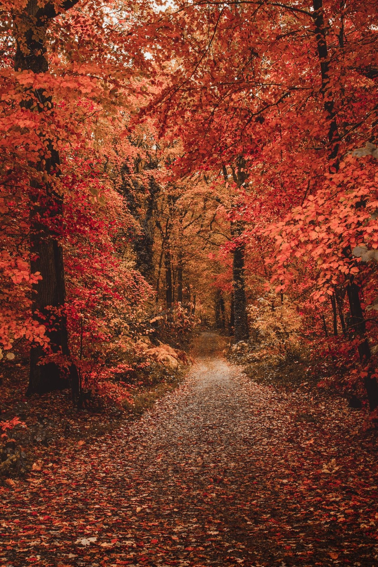 Maureen2musings French Fall Matreding 秋の壁紙 風景 風景
