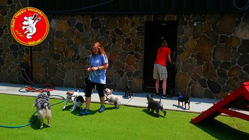Doggie Daycare At Just Happy Hounds Midtown In Birmingham
