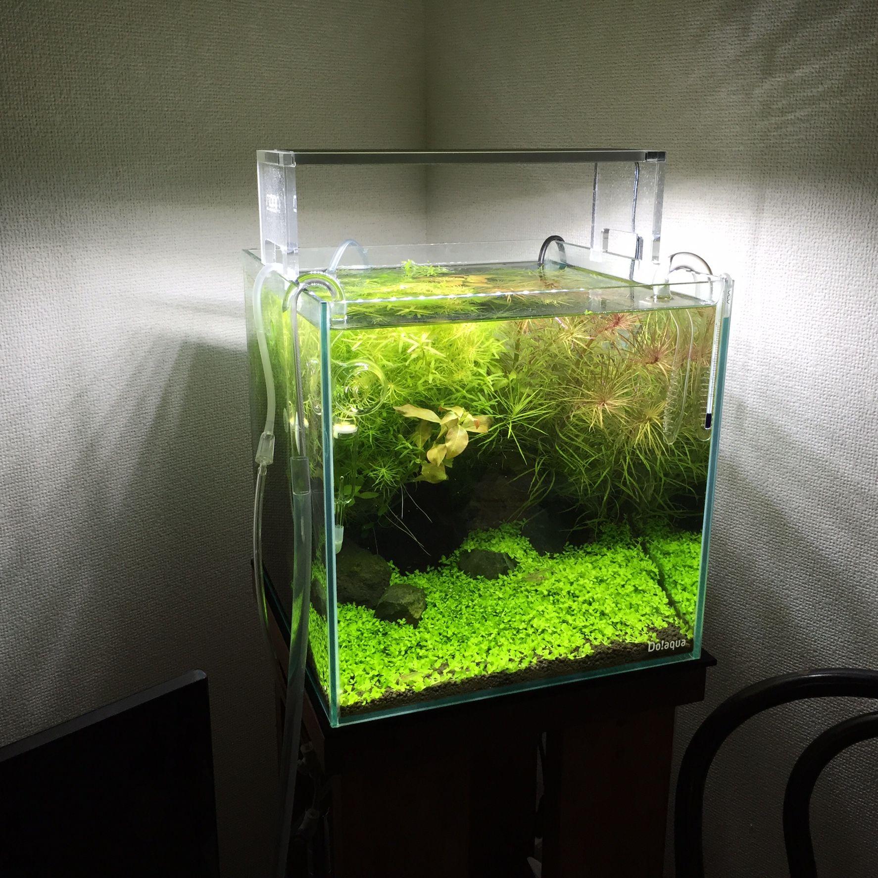 30cm Cube 30x30x30 Discus Aquarium Freshwater Aquarium Aquascape