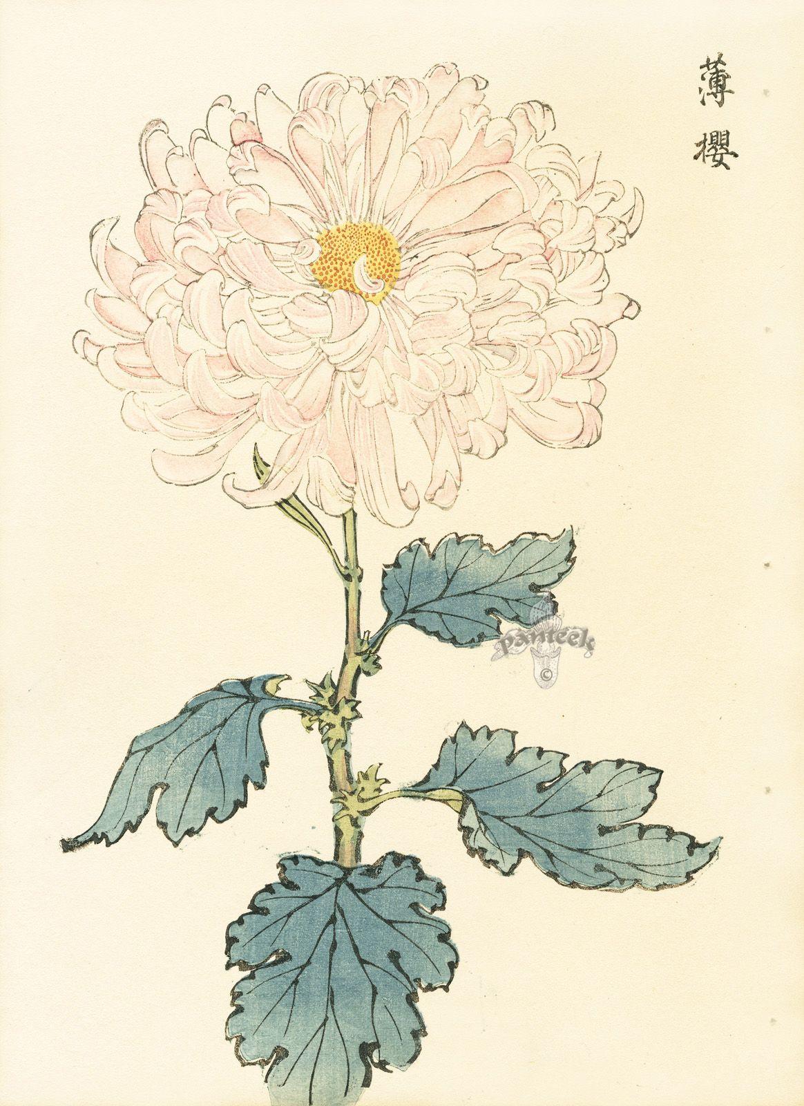 Keika Hasegawa Chrysanthemum Wood Block Prints 1893