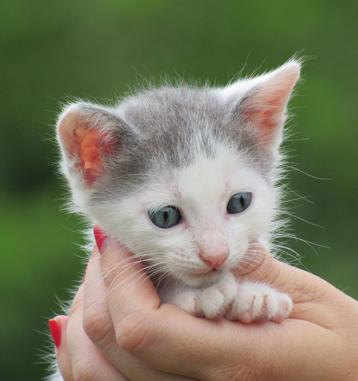 All The Best Kitten Names In One Place With Cute Unique And Creative Names For Your Baby Boy Or Girl Kitty Find The Perfect Cat In 2020 Kitten Names Kitten Cat Names